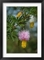 Framed Ethiopia, Arba Minch, Nech Sar, Flora