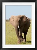 Framed African Elephant, Maasai Mara, Kenya