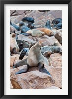 Framed Cape Fur seals, Cape Cross, Skeleton Coast, Kaokoland, Namibia.