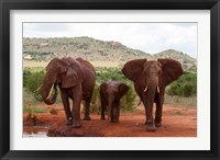 Framed Elephants and baby, Tsavo East NP, Kenya.