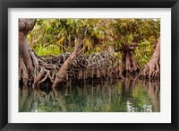 Framed Africa, Liberia, Monrovia. View of mangroves on the Du River.