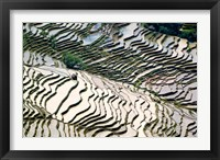 Framed Flooded Bada Rice Terraces, Yuanyang County, Yunnan Province, China