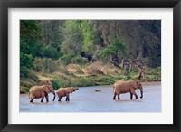 Framed African Elephant crossing, Samburu Game Reserve, Kenya