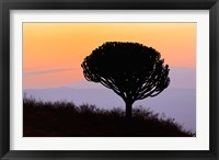 Framed Candelabra Tree, sunrise, Ngorongoro Crater, Tanzania