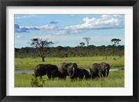 Framed Elephant, Zimbabwe
