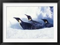 Framed Emperor Penguins in Dive Hole, Antarctica