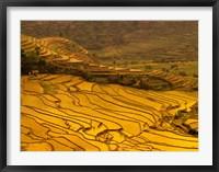 Framed Farmers Plant Rice, Luchun, Yunnan, China