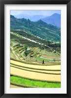 Framed China, Yunnan, Yuanyang Co, Rice Terraces, Mount Ailo