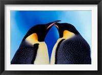 Framed Emperor Penguin Pair, Antarctica