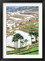 Framed Asia, China, Yunnan Province, Jiayin. Flooded Terraces