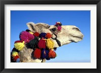 Framed Colorfully Decorated Tourist Camel, Egypt