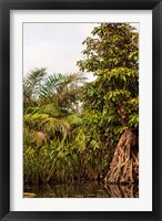 Framed Africa, Liberia, Monrovia. Plantlife along the Du River.