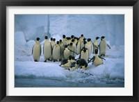 Framed Emperor Penguins, Cape Roget, Ross Sea, Antarctica