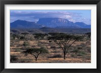 Framed Acacia and Distant Massif North of Mt Kenya, Samburu National Reserve, Kenya