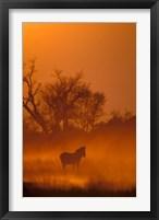Framed Burchell's Zebra at Sunset, Okavango Delta, Botswana