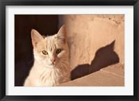 Framed Cat inside kasbah de Taourirt; same clay color!