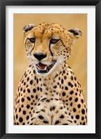 Framed Cheetah in the Brush, Maasai Mara, Kenya