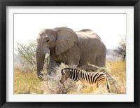 Framed African Elephant and Zebra at Namutoni Resort, Namibia