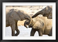Framed African Elephants at Halali Resort, Namibia