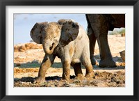 Framed Baby African Elephant in Mud, Namibia