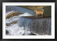 Framed Dog on the waterfall, Pingnan, Fujian, China