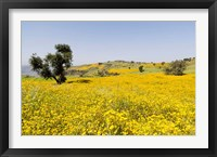 Framed Flower Field, Niger seed, Semien Mountains, Ethiopia