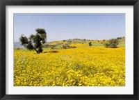 Framed Flower Field, Niger seed, Semien Mountains, Ethiopia