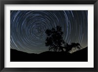 Framed lone oak tree silhouetted against a backdrop of star trails