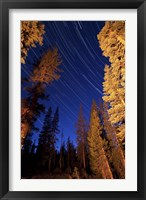 Framed Star trails above campfire lit pine trees in Lassen Volcanic National Park