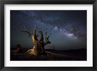 Framed Milky Way and a dead bristlecone pine tree in the White Mountains, California