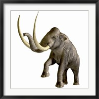 Framed Columbian Mammoth