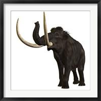 Framed Woolly Mammoth