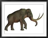 Framed Columbian mammoth, an extinct species of elephant
