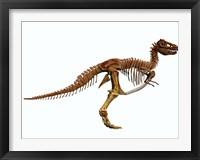 Framed Tyrannosaurus Rex dinosaur skeleton