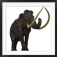 Framed Woolly Mammoth
