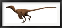 Framed Velociraptor mongoliensis was a mid-sized dinosaur from the Cretaceous Period