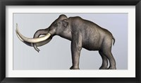 Framed Profile view of Columbian Mammoth