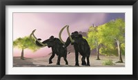 Framed Two Woolly Mammoths searching for better vegetation to eat