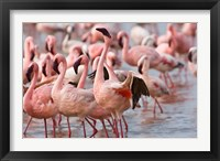 Framed Kenya, Lake Nakuru, Flamingo tropical birds