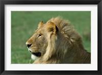 Framed Kenya, Masai Mara Game Reserve, Lion