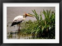 Framed Kenya. Masai Mara, Yellowbilled stork bird