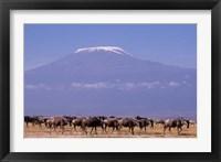 Framed Kenya: Amboseli NP, wildebeest wildlife, Mt Kilimanjaro