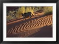 Framed Leopard on sand dunes, Namib-Naukluft Park, Namibia
