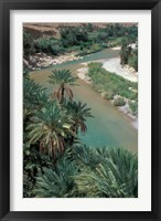 Framed Lush Palms Line the Banks of the Oued (River) Ziz, Morocco