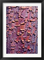 Framed Madrone Tree Bark Abstract pattern