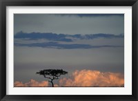 Framed Lone Acacia Tree, Masai Mara Game Reserve, Kenya