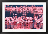Framed Lesser Flamingos, Lake Nakuru, Kenya