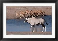 Framed Namibia, Etosha NP, Chudop, Oryx, black-faced impala