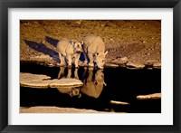 Framed Namibia, Etosha NP, Black Rhino wildlife, waterhole