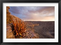 Framed Namibia, Fish River Canyon National Park, desert plant